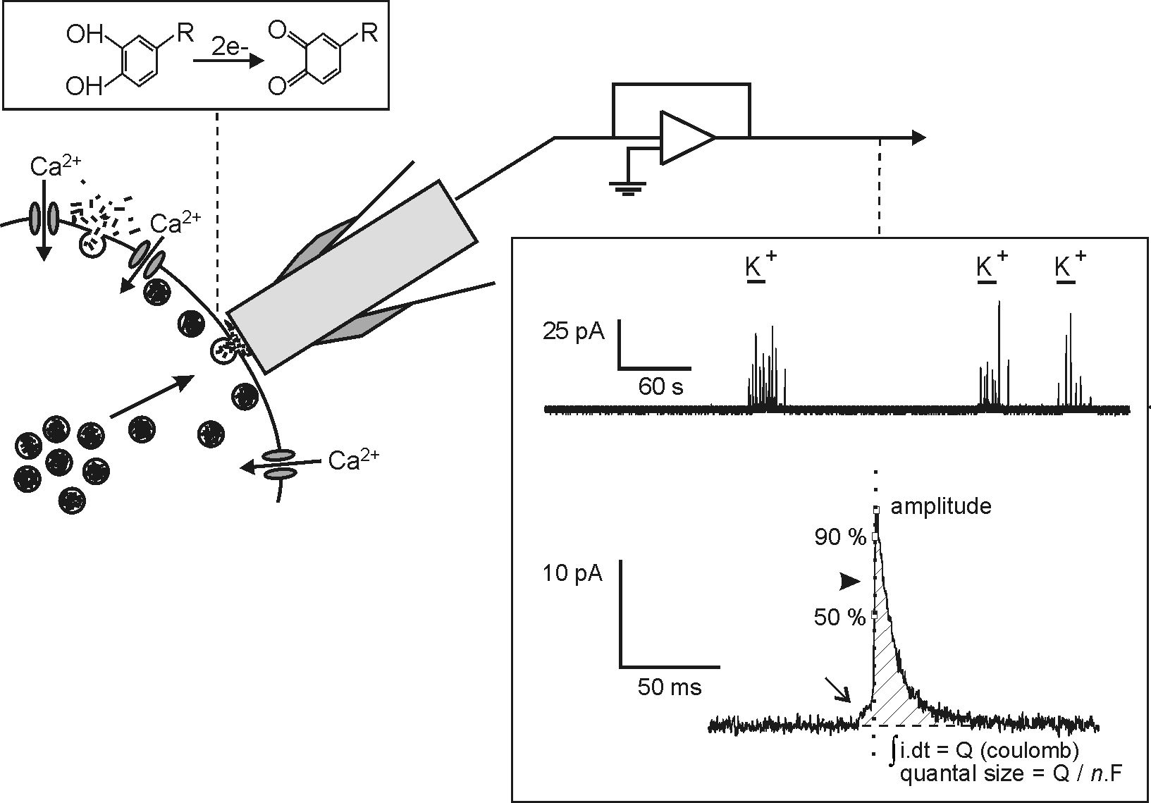 amperometry Amperometry analyte anode base buffer cathode co oximetry electrochemical cell electrode oxidation partial pressure of oxygen (po 2) potentiometric pulse oximetry reduction introduction blood gas analysis provides critical information to  gas chapter 6 blood gas and critical care analyte analysis.